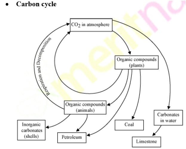 carbon and nitrogen cycle essay